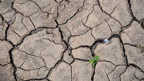 Zakaz poboru wody do podlewania w gminie Tczew
